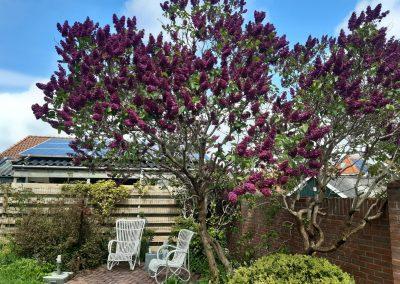 Tuin met zithoek